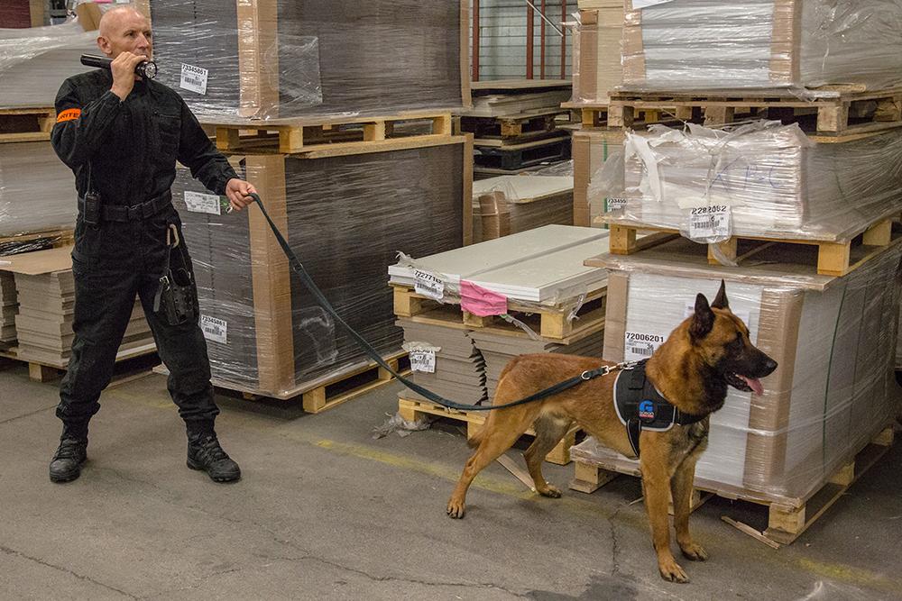 Pourquoi un tel manque d'agents de sécurité cynophiles en France ? – RNMPS