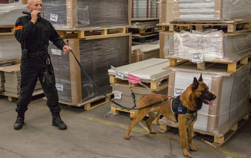 Agents de sécurité cynophiles : pourquoi un tel manque d'effectifs en France ?